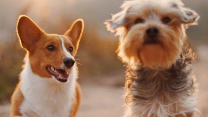 razas-de-perros-mas-buscadas